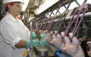 chickens texas slaughterhouse