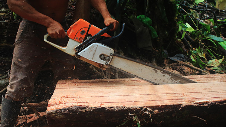 A logger cuts through a felled tree with a chainsaw in the Brazilian Amazon