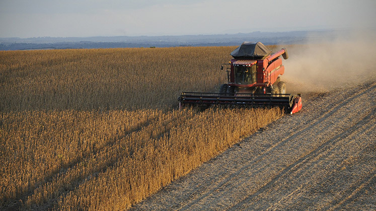 A combine harvester passes through a Brazilian soy field