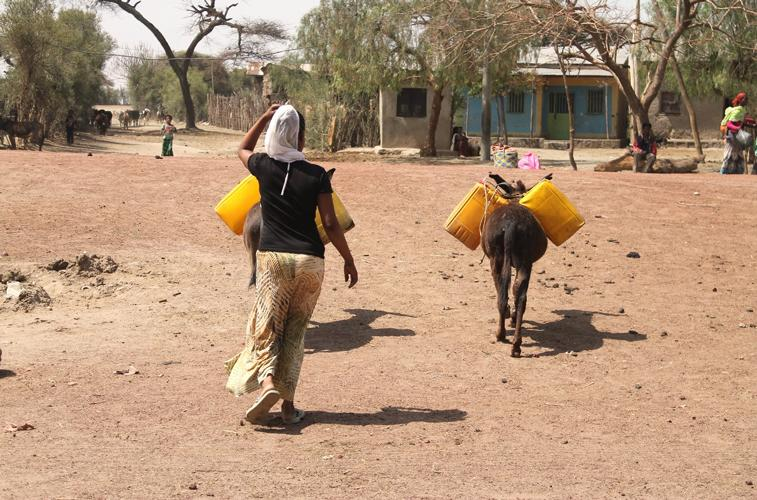A women walks her donkey carrying cans in Ethiopia