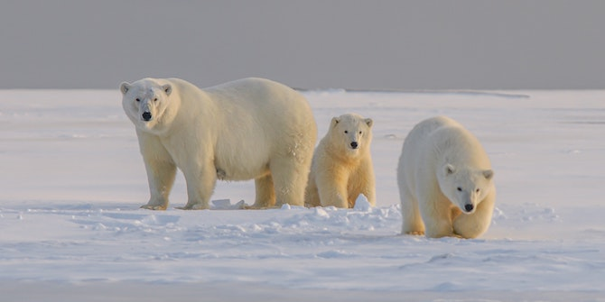 Who Cares About the Polar Bear in Kuwait?