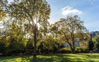 trees in lincoln's inn fields, credit, Catarina Heeckt