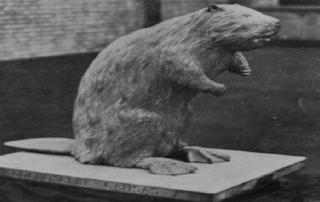 LSE Beaver